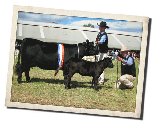 Amberfield Angel at Royal Toowoomba Show 2008